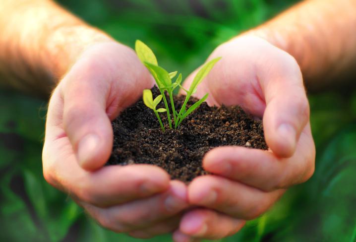 Cómo sembrar hortalizas